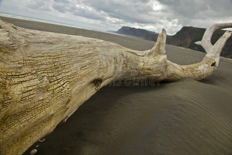 Karekare海滩漂流木头 库存图片