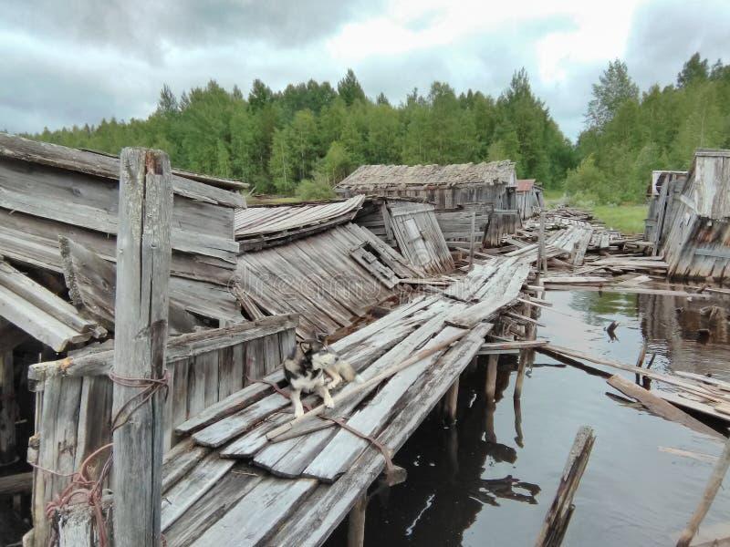 Karelia - övergiven fartygpir arkivfoto