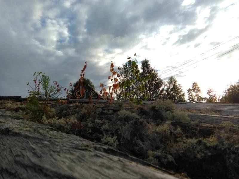 Karelia - mossa som växer på taket royaltyfria bilder