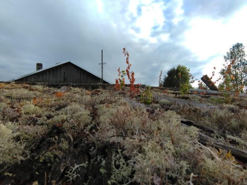 Karelia - mossa som växer på taket royaltyfri foto