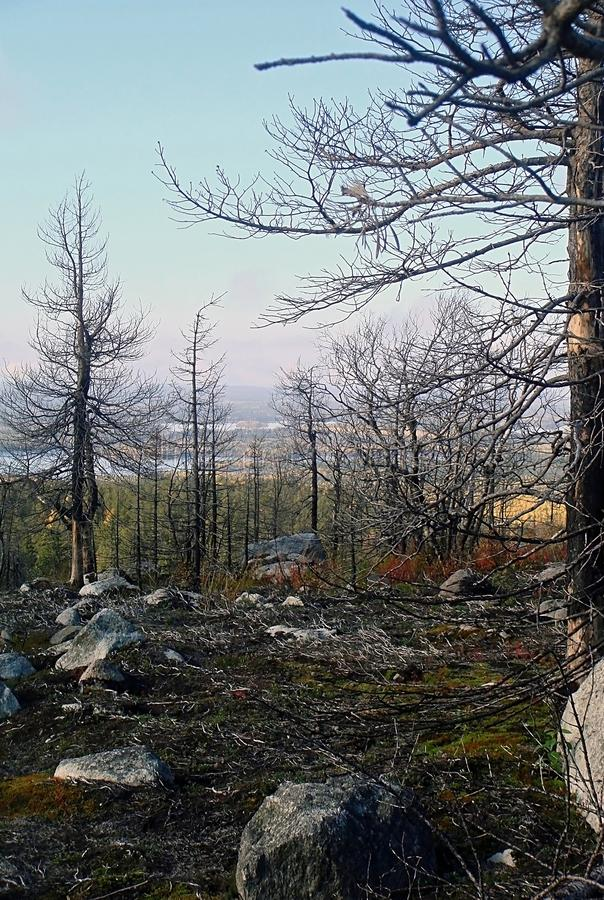 Karelian forest landscape royalty free stock photo