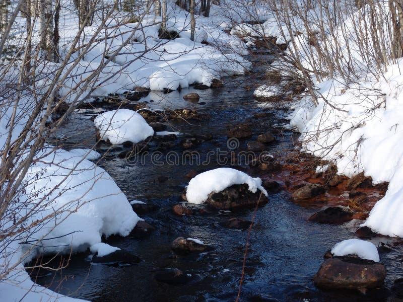 Download Karelian wiosna zdjęcie stock. Obraz złożonej z obudzi - 136864
