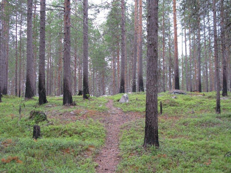 Kareliya, Russia fotografie stock