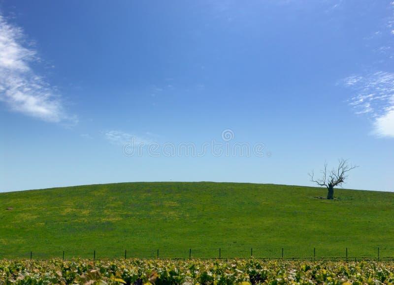Download Karg tree arkivfoto. Bild av vingård, tree, tillväxt, kull - 281744