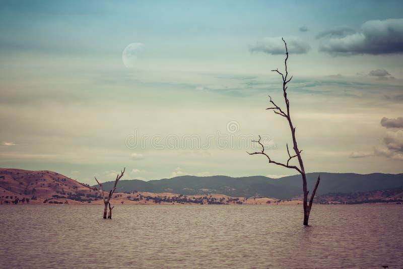 Karga träd som växer ut ur sjövatten royaltyfria foton