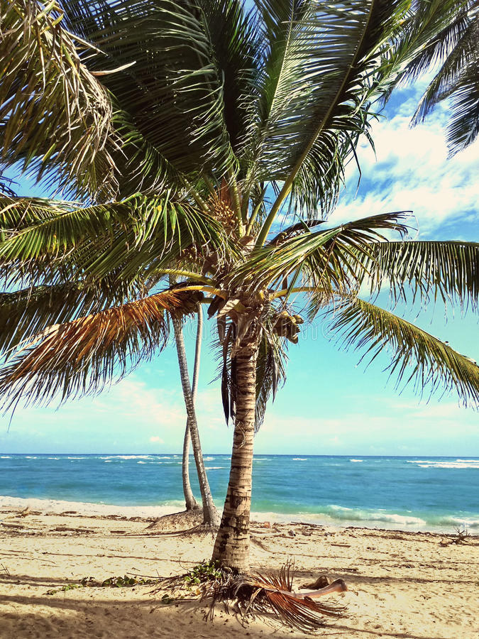 Karibische Ferien lizenzfreie stockbilder