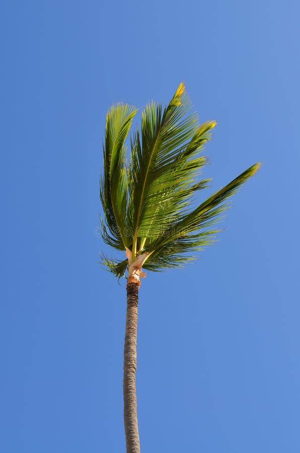 Karibische Kokosnuss stockfotografie