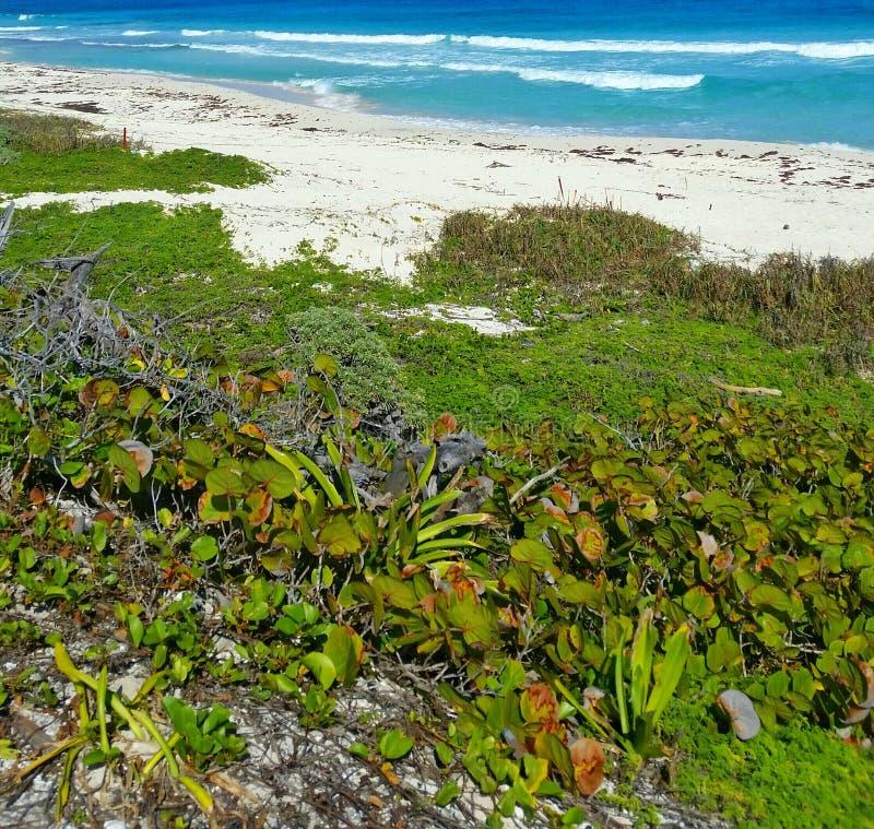 Karibische Meere in Cozumel lizenzfreie stockbilder