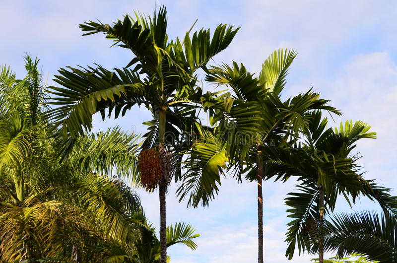 Karibische Palmen stockbilder