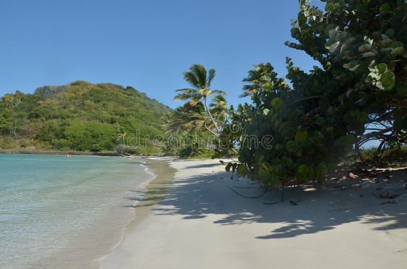 Karibische Strandpalmen der unbewohnten Insel stockfotografie