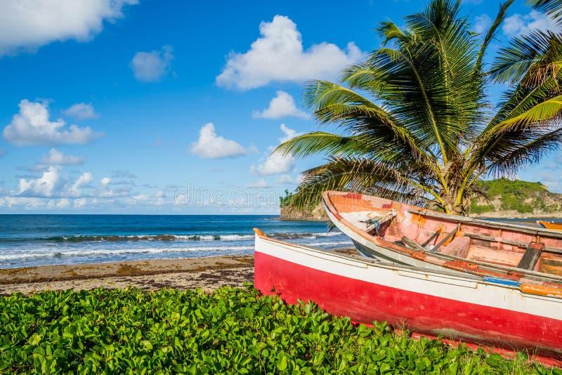 Karibischer Martinique-Strand neben traditionellen Fischerbooten stockfotografie