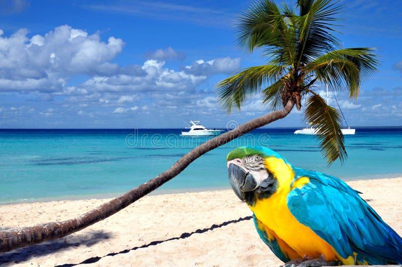 Karibischer Strand lizenzfreies stockfoto