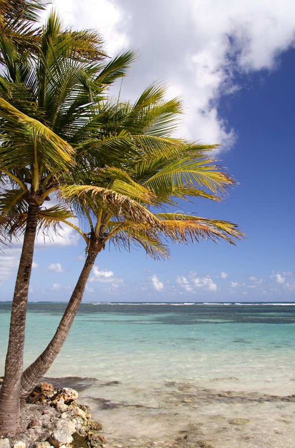 Karibischer Strand lizenzfreies stockbild