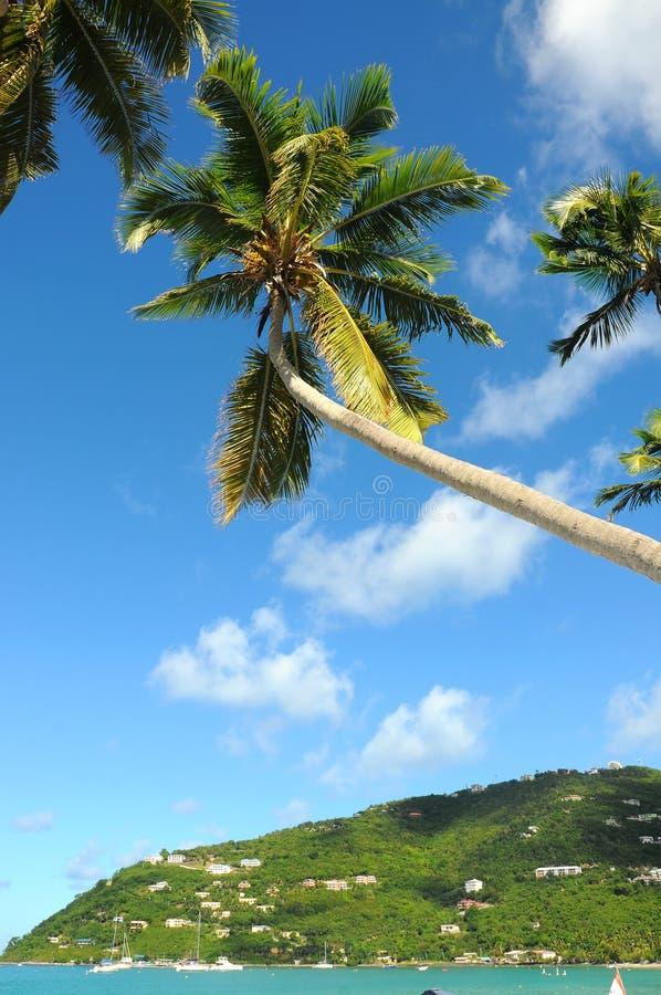Karibischer Strand mit Palme lizenzfreie stockfotos