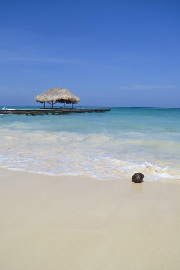 Karibischer Strand und Kokosnuss stockfotografie