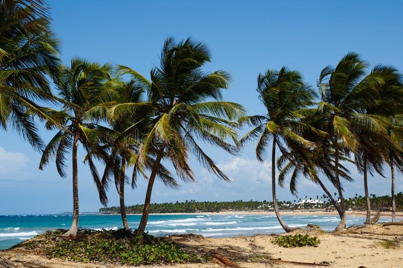 Karibischer Traum stockfotografie