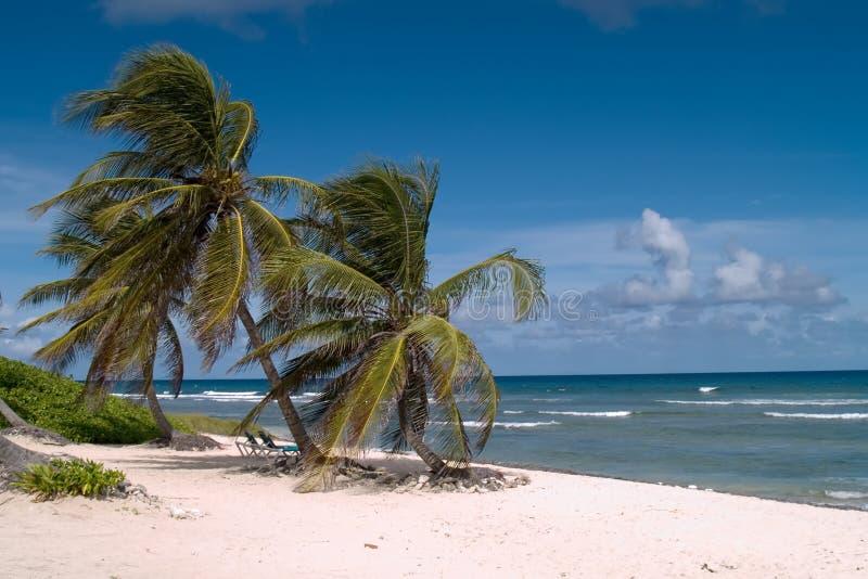 karibisk ö för eftermiddag royaltyfri fotografi