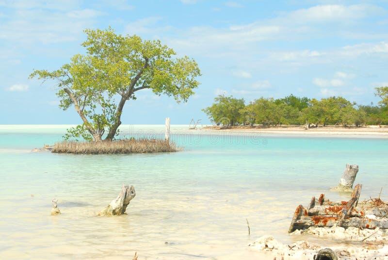 Karibisk natur för Holbox ö royaltyfri bild