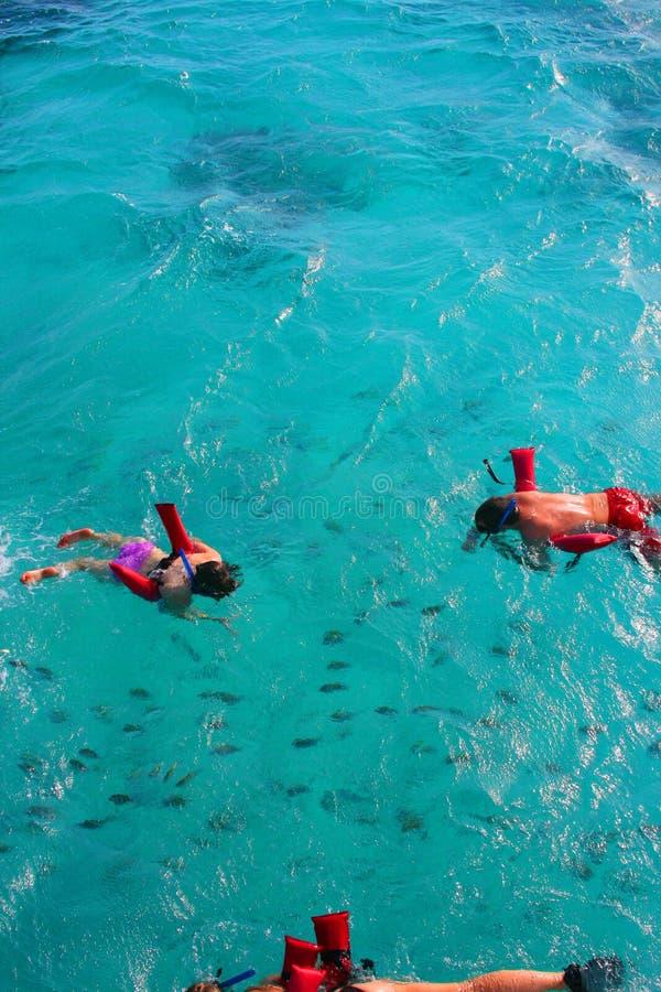 karibisk snorkeling royaltyfri fotografi