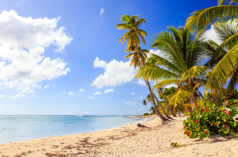 Karibisk strand i Dominikanska republiken arkivbilder