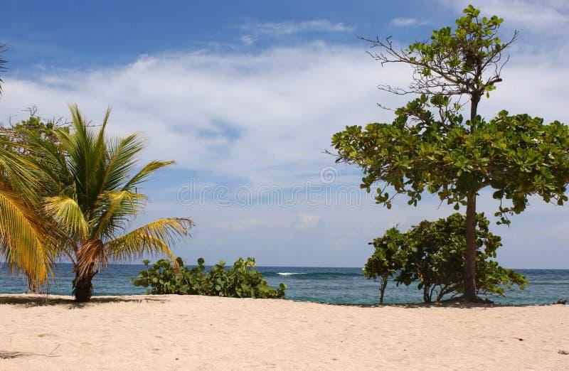 Karibisk strand och tropiskt hav i Ladbadee Haiti royaltyfri fotografi
