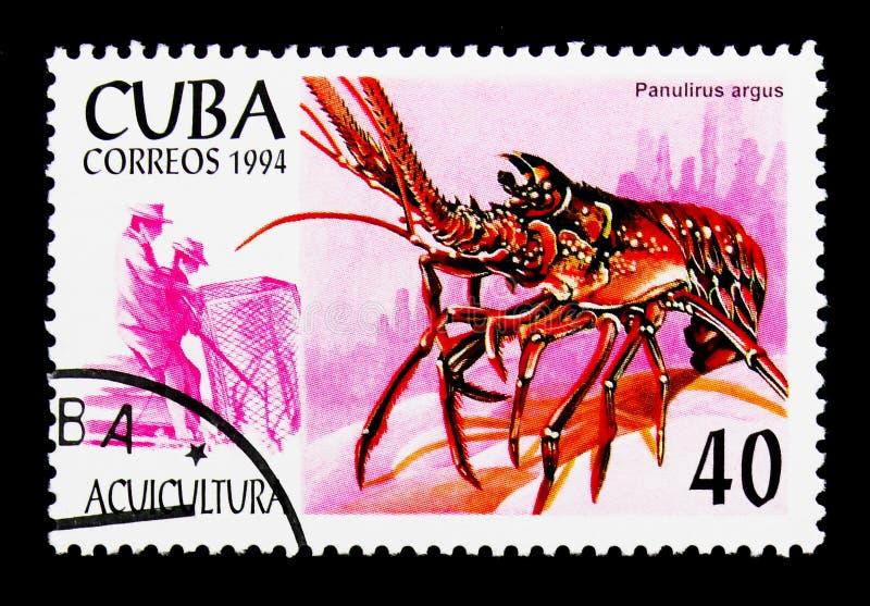 Karibisk taggig hummer Panulirus argus, vattenbrukserie, circa 1994 arkivbilder