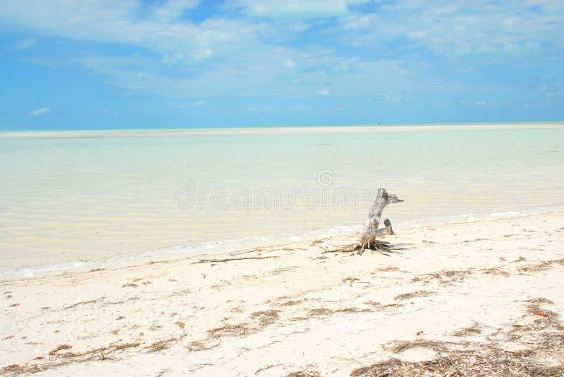 Karibiskt paradis för Holbox ö royaltyfria foton
