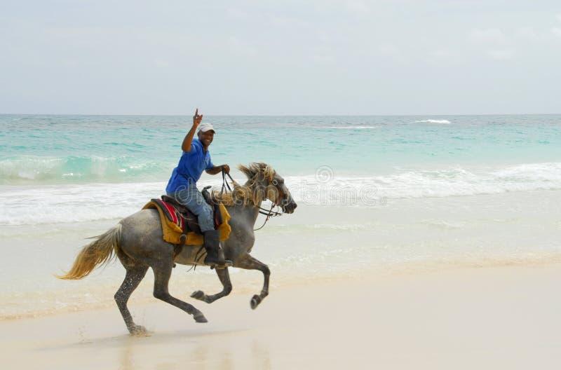 karibiskt riddareparadis s royaltyfri bild