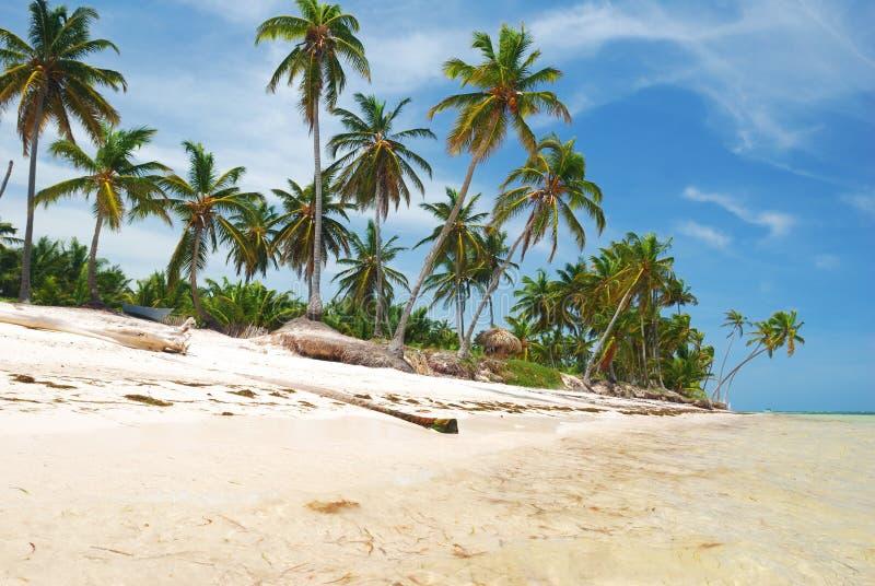 karibiskt wild för strand royaltyfri fotografi