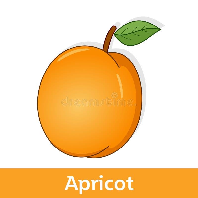 Karikatur-Frucht - orange Aprikose mit Blatt vektor abbildung