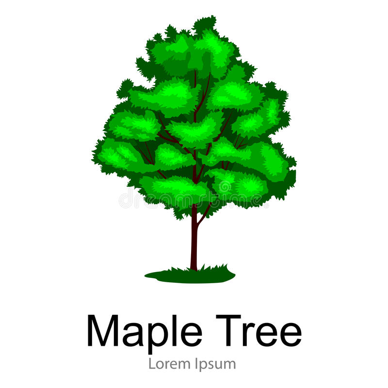 Karikatur lokalisierte Ahornsommerbaum auf einer weißen Hintergrundikone, Park im Freien mit Niederlassung, Blätter auf Vektor de stock abbildung