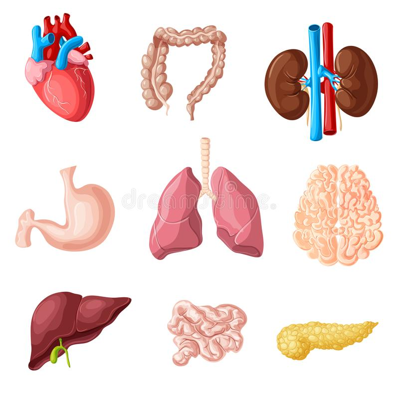 Karikatur-menschliche innere Organe eingestellt stock abbildung