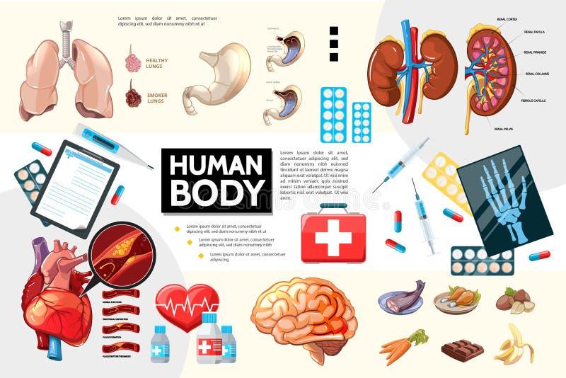 Karikatur-menschlicher Körper-Anatomie Infographics vektor abbildung
