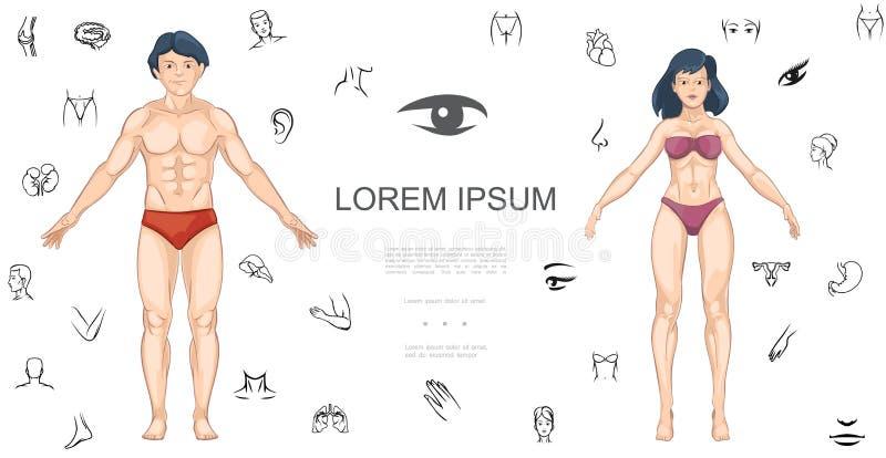 Karikatur-menschliches Anatomie-Konzept lizenzfreie abbildung
