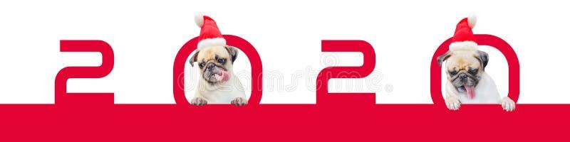 Karikatur zwei wenig Pug-Hund in einem roten Weihnachtshut mit Nr. 2020 Nettes Karikaturweihnachtstierhund Weihnachten und neues  stockbilder