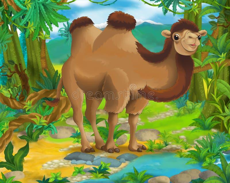 Karikaturszene - wilde Asien-Tiere - Kamel lizenzfreie abbildung