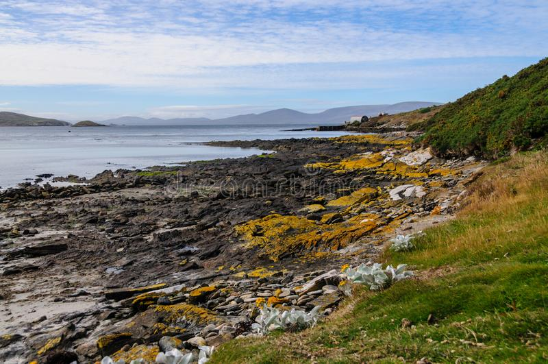 Karkaseiland op de Falkland Eilanden stock fotografie