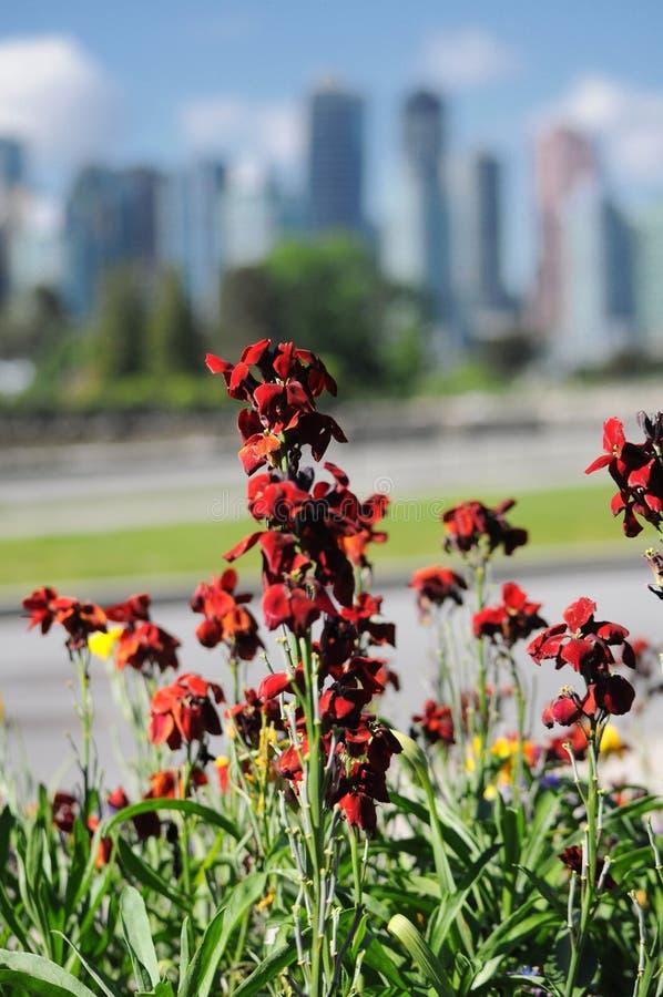 Karmazynów kwiaty fotografia royalty free