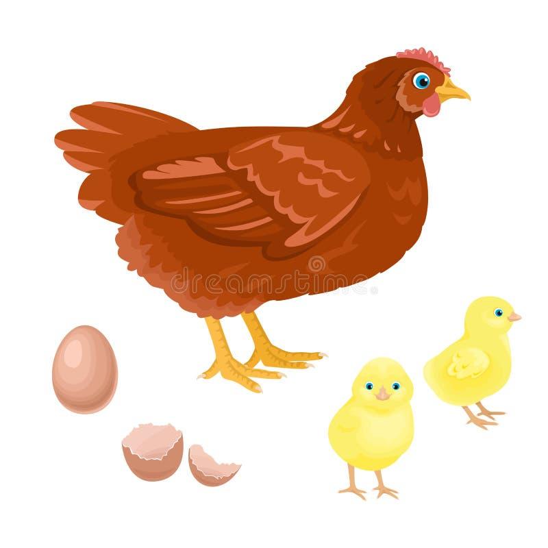 Karmazynka z nowonarodzonym żółtym kurczątkiem Kurczak, kurczątka i jajka odizolowywający na białym tle, ilustracja wektor