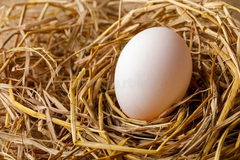 Karmazynki lub kaczki jajko na słomie zdjęcia stock