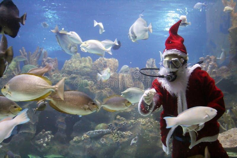 karmienia ryb klauzuli Mikołaja zdjęcia stock