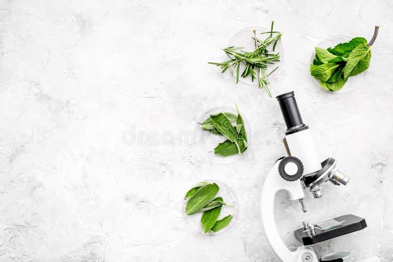Karmowa analiza Pestycydy uwalniają warzywa Ziele rozmaryny, nowy pobliski mikroskop na popielatej tło odgórnego widoku kopii prz zdjęcia stock