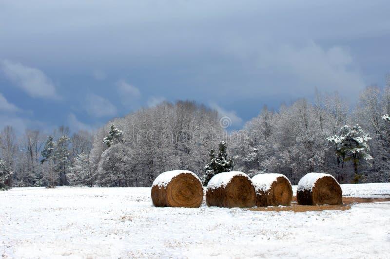 karmowa zima zdjęcie royalty free