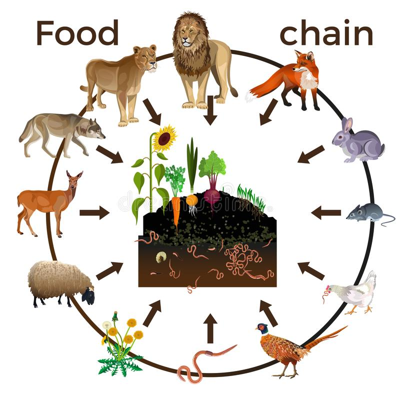 Karmowego łańcuchu zwierzęta ilustracja wektor