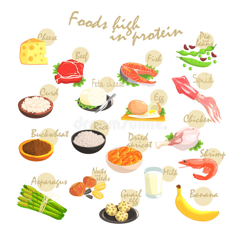 Karmowy bogactwo W proteinach Plakatowych ilustracji