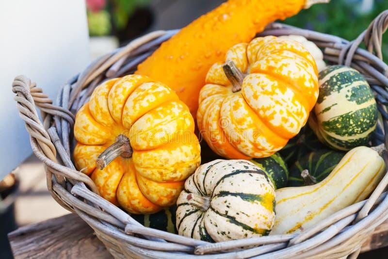 Karmowy koszykowy pojęcie Kolorowe Halloween banie w drewniany łozinowym Jesień rolników żniwo, dziękczynienie dzień konceptualny obraz stock