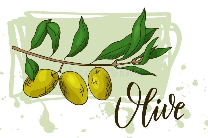 Karmowy projekt z warzywem Ręka rysujący nakreślenie oliwka Organicznie świeży produkt dla karty lub plakatowego projekta dla ryn royalty ilustracja