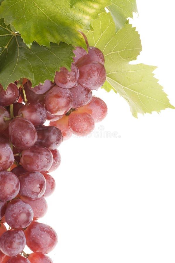 karmowy winogrono nad bielem obraz royalty free