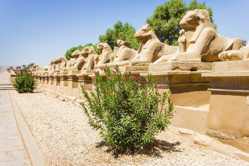 Karnak寺庙古老废墟在埃及 图库摄影