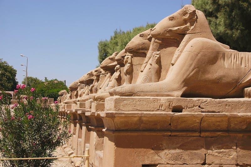 Karnak - Ägypten stockfotos